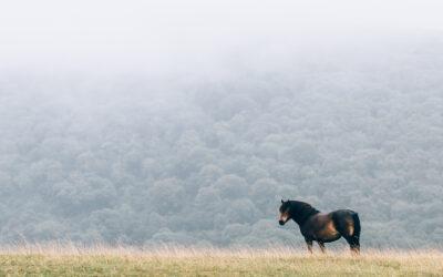 O tym, jak sprzedałam konia za 50 zł i zostałam sprzedawcą, którego się nie poleca